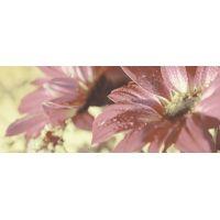 Керамическое панно 500*200.29 Сиерра 3С  тип 1 цветы 13 шт