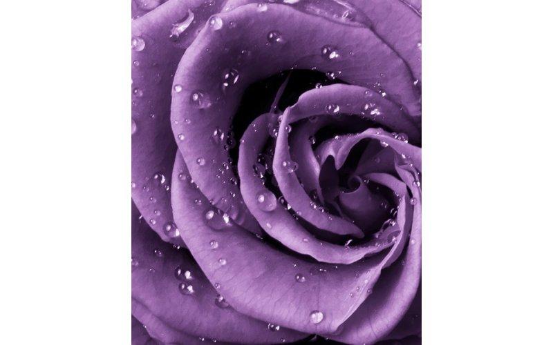 "Фотообои DIVINO DECOR А2-038 ""Роза фиолет"" 2,0 х 2,38 м"