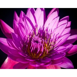 "Фотообои DIVINO DECOR Б1-386 ""Яркий цветок"" 3,0 х 2,38 м"
